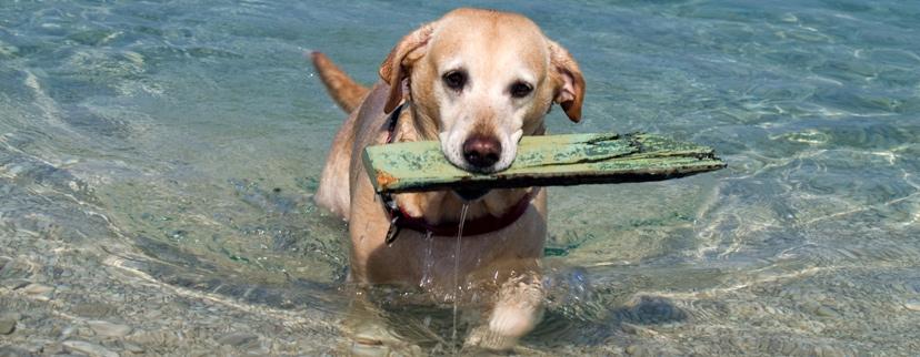 Vacanze con animali Abruzzo