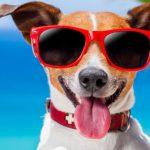 Vacanza con il cane | Vacanze con cani e gatti in Abruzzo