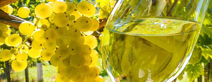 vino montepulciano | trebbiano d'abruzzo | vini abruzzesi